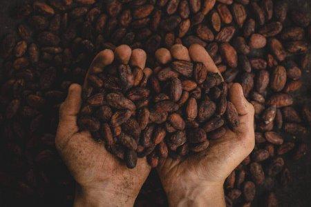 Tipi di caffè: quante varietà esistono e quali sono le migliori?